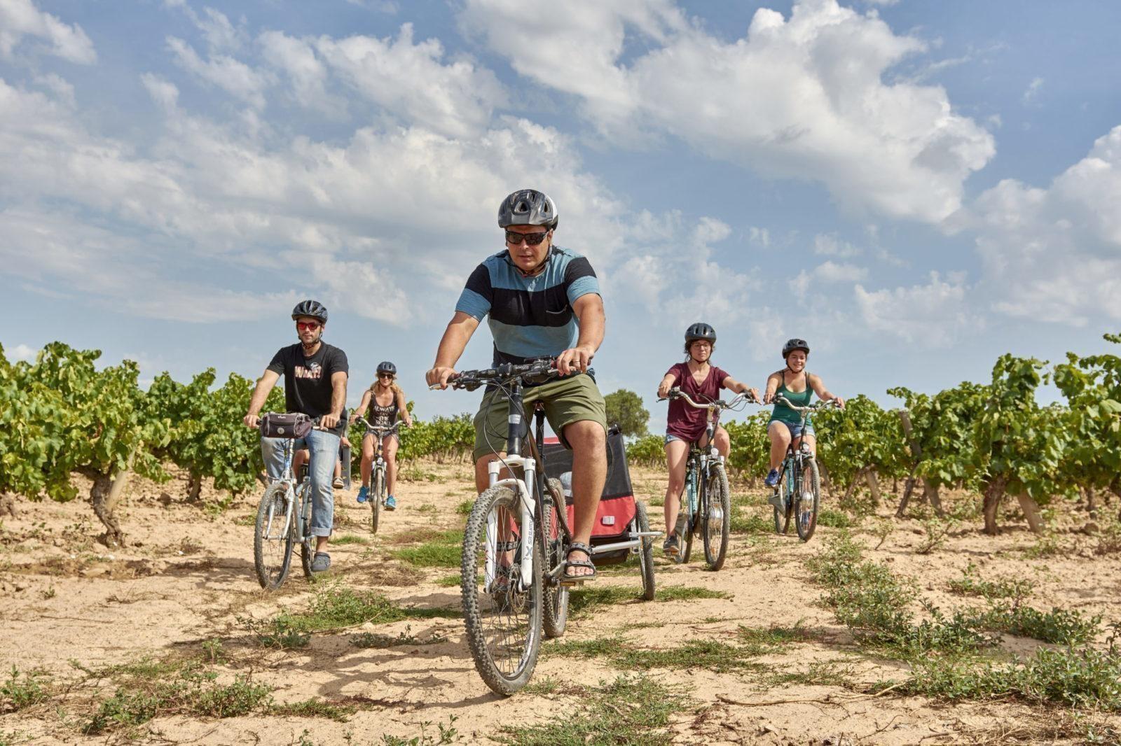 Visita celler de la Carretera del Vi en bicicleta