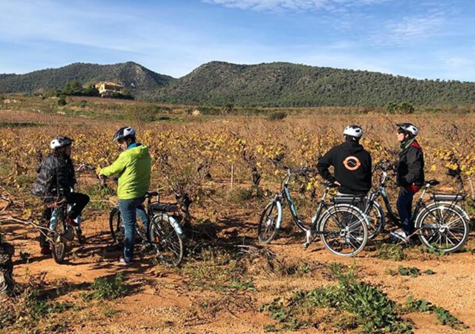 Visita celler del Baix Penedès en bicicleta o Ebike (3h)
